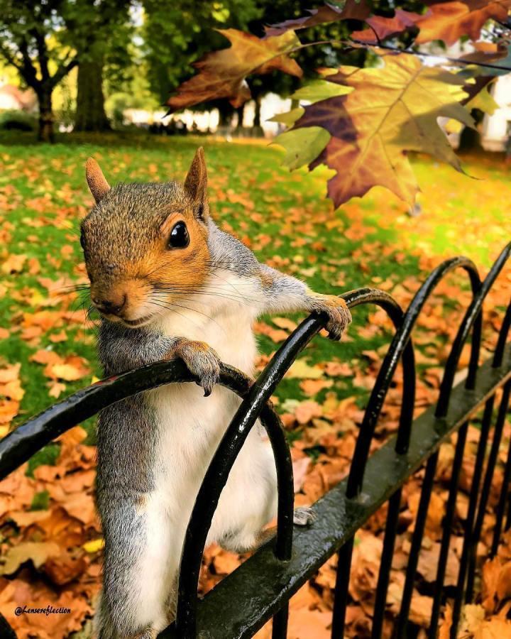 écureuil park