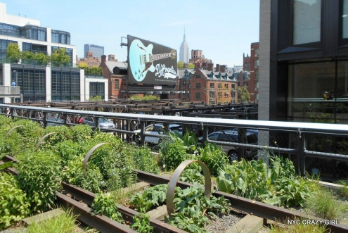 high-line-chelsea-manhattan-new-york-3