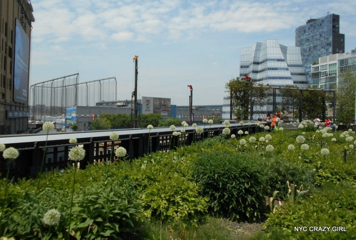 high-line-chelsea-manhattan-new-york-5
