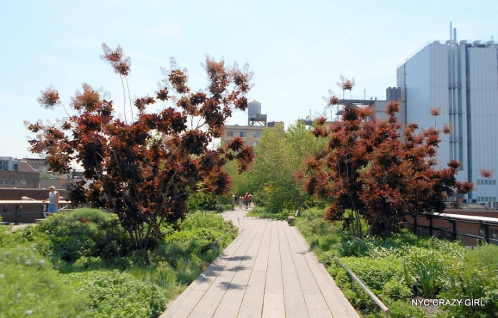 high-line-chelsea-manhattan-new-york-9