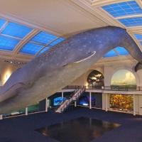 La liste de toutes les choses  incroyables que tu pourras découvrir à l'American Museum of Natural History