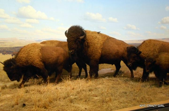 museum-of-natural-history-new-york-manhattan-ben-stiller