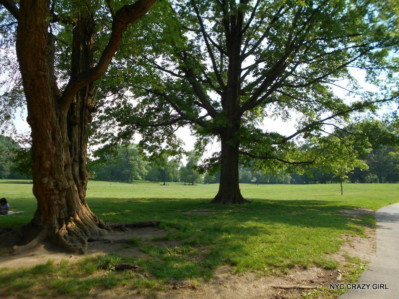 prospect-park-brooklyn-new-york-6
