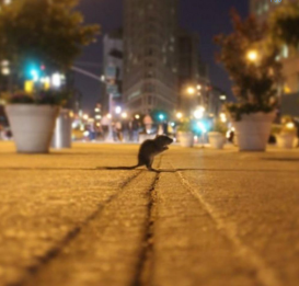 rat-new-york