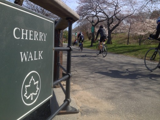 cherry-walk-riverside-park-new-york-cherry-blossom