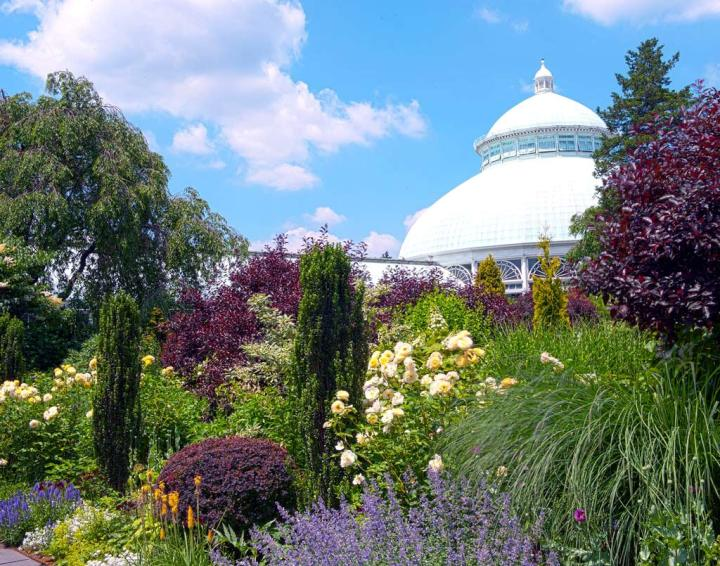 jardin-botanique-bronx-cherry-blossom