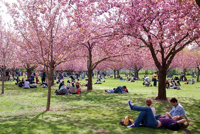 Exceptionnel 8 spots parfaits pour profiter du Cherry Blossom à New York – New  LO53