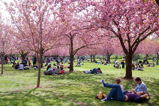 8 spots parfaits pour profiter du cherry blossom new for Jardin new york