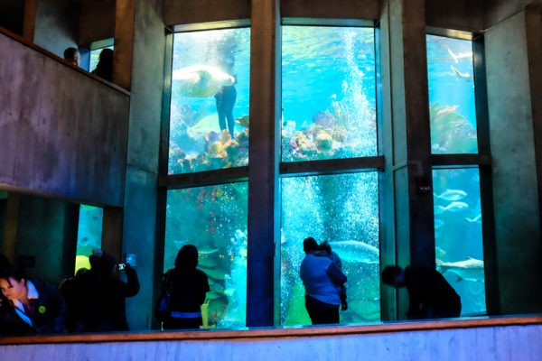 new-england-aquarium-boston
