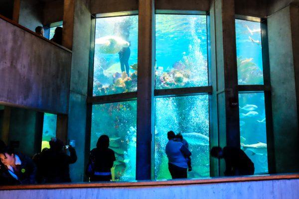 new-england-aquarium-boston