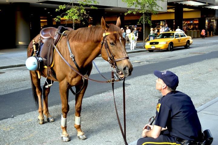 policier nypd new york (3)