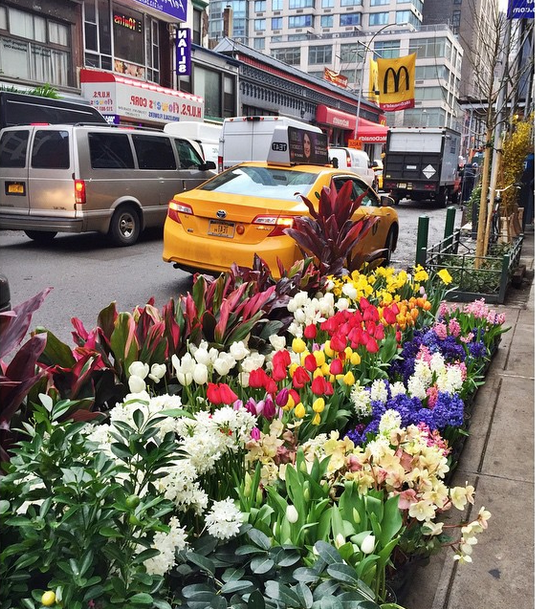 printemps-fleurs-new-york