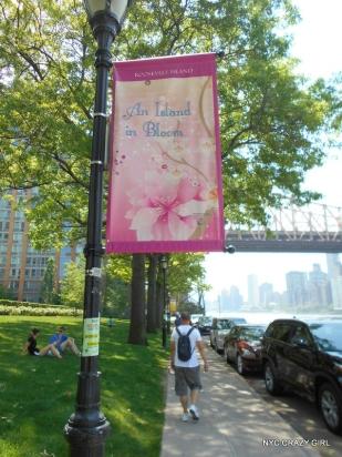 roosevelt-island-new-york-cherry-blossom