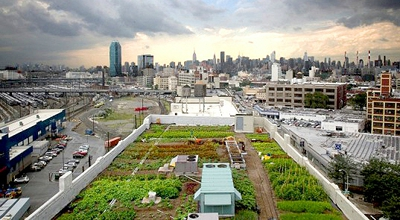 ferme-sur-les-toits-new-york-brooklyn-manhattan-hipster-slow-food-bio-4