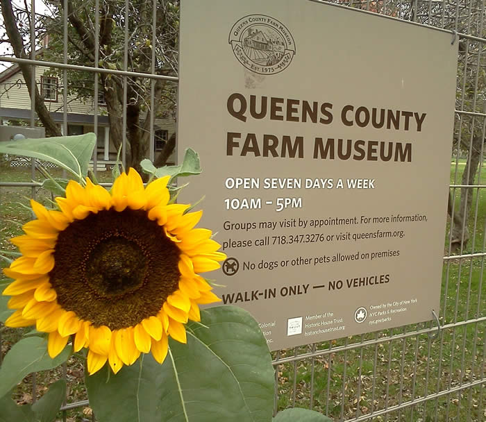 queens county farm museum.jpg