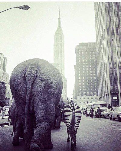 cirque barnum new york.jpg
