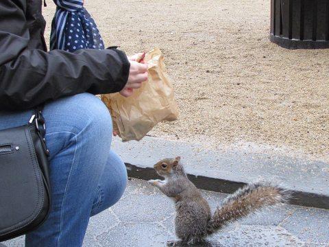 écureuil Central park New York (3)