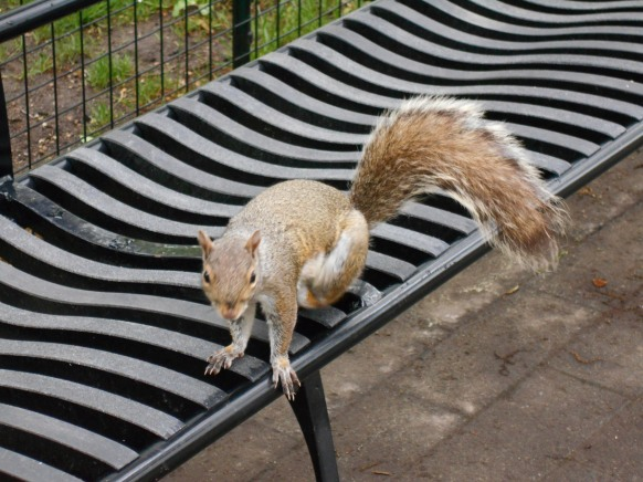 écureuil Central park New York (4)