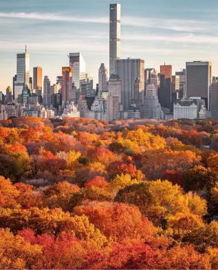 central park fall foliage (2)