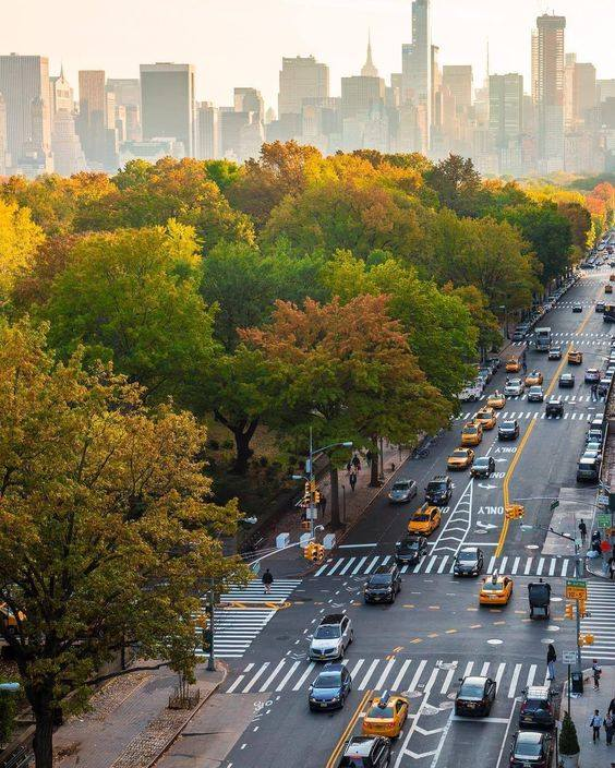 fall foliage automne central park