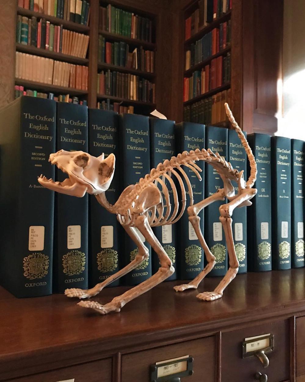 morgan library squelette